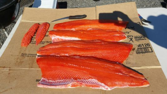 Fish 17-15
